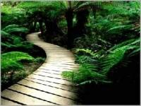 Counselling Path